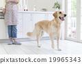 厨房 狗 狗狗 19965343