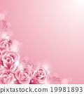 玫瑰 玫瑰花 花朵 19981893