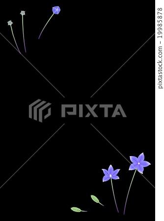 Background (black) bellflower 19985878