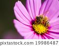 生態 背景 昆蟲 19986487