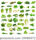 Vegetables collection isolated on white background 19986972