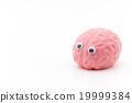 大腦 頭腦 眼球 19999384