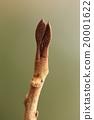 植物 植物學 植物的 20001622