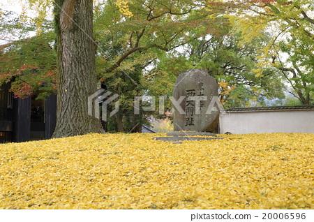 Ginkgo biloba of Nara Todaiji Temple major monument 20006596