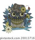 bird, detailed, owl 20013716