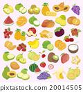 水果 插图 一组 20014505