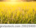 벼농사 · 벼농사 20020400