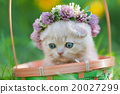 Little kitten crowned with a chaplet of clover 20027299