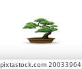 bonsai 20033964