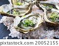 Fresh Oysters 20052155