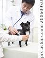 獸醫 診斷 調查分析 20060950