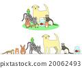 宠物 一套 小组 20062493