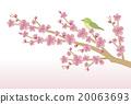 Cherry blossom & white-eye 20063693