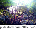 forest, jungle, landscape 20070545
