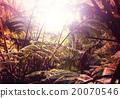 forest, jungle, landscape 20070546