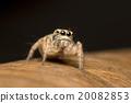 Spider 20082853