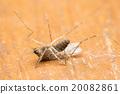 mosquito 20082861