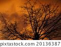 晚景 樹木 樹 20136387