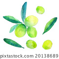 olive, watercolour, watercolors 20138689