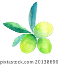 olive, watercolour, watercolors 20138690