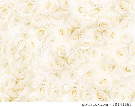 背景 花朵 花 20141163