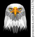 sea eagel face 20152776