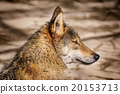 Portrait of Wolf 20153713