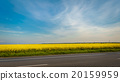 Country Road and Canola Field  20159959