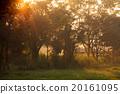 tree, morning, beautiful 20161095