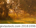 Beautiful morning sunlight through tree in forest 20161096