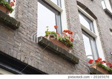 Dutch gardening 20165070