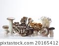 mushroom, mushrooms, pholiota nameko 20165412