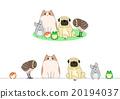 寵物 一套 小組 20194037
