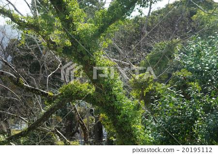 Green tree 20195112