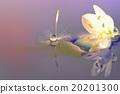 花朵 照相 反映 20201300