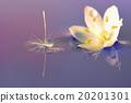 花朵 照相 反映 20201301