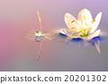 花朵 照相 反映 20201302