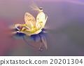 花朵 照相 反映 20201304