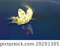 花朵 照相 反映 20201305