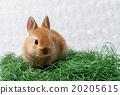 토끼 20205615