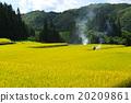 白马村 水稻 景观 20209861