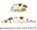 寵物 一套 排 20210575