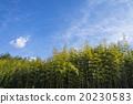 竹叢 天空 樹林 20230583
