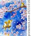櫻花 櫻 賞櫻 20231016