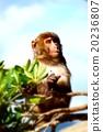 남국의 원숭이 20236807