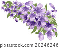Lavender with leaves 20246246