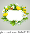 Fresh spring background with grass, dandelions and 20248255