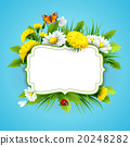 Fresh spring background with grass, dandelions and 20248282