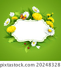 Fresh spring background with grass, dandelions and 20248328