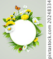 Fresh spring background with grass, dandelions and 20248334
